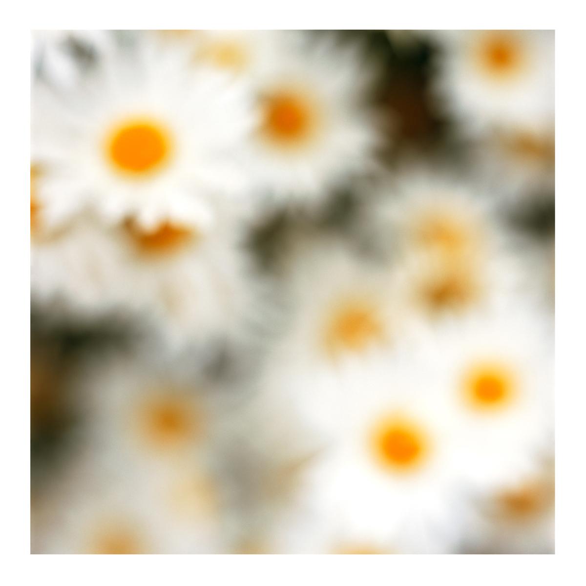 Flora In Situ #10, 2018
