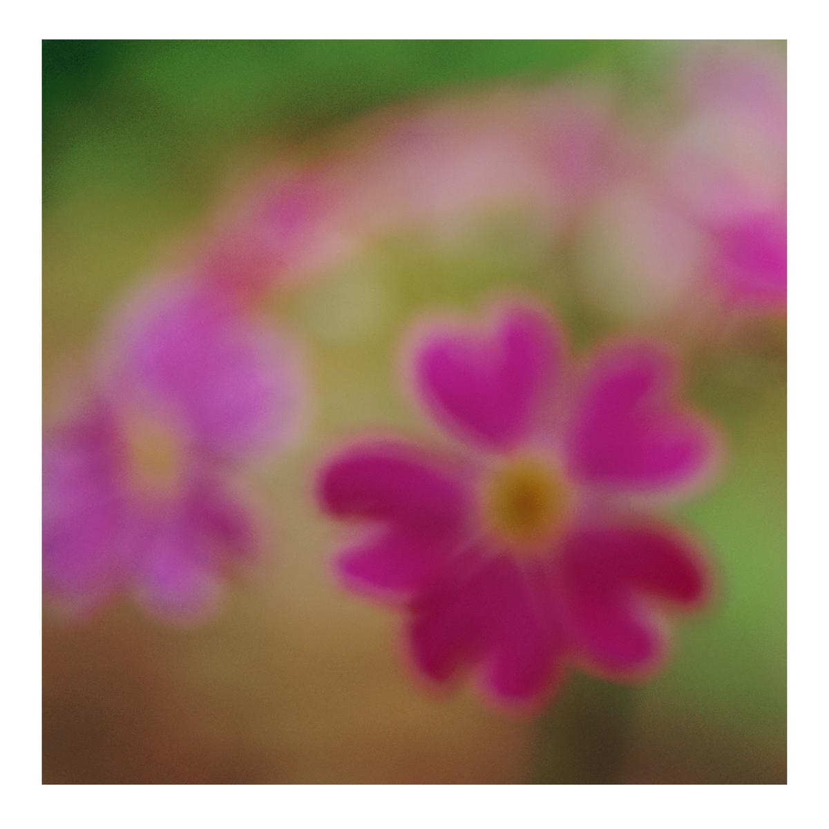 Flora In Situ #14, 2019