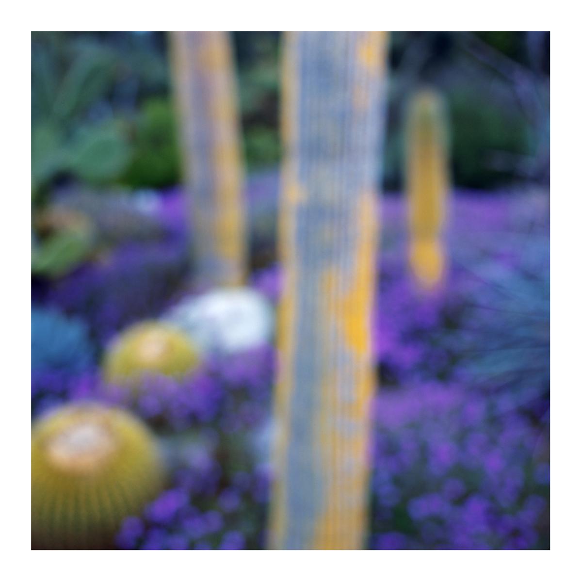 Flora In Situ #18, 2018