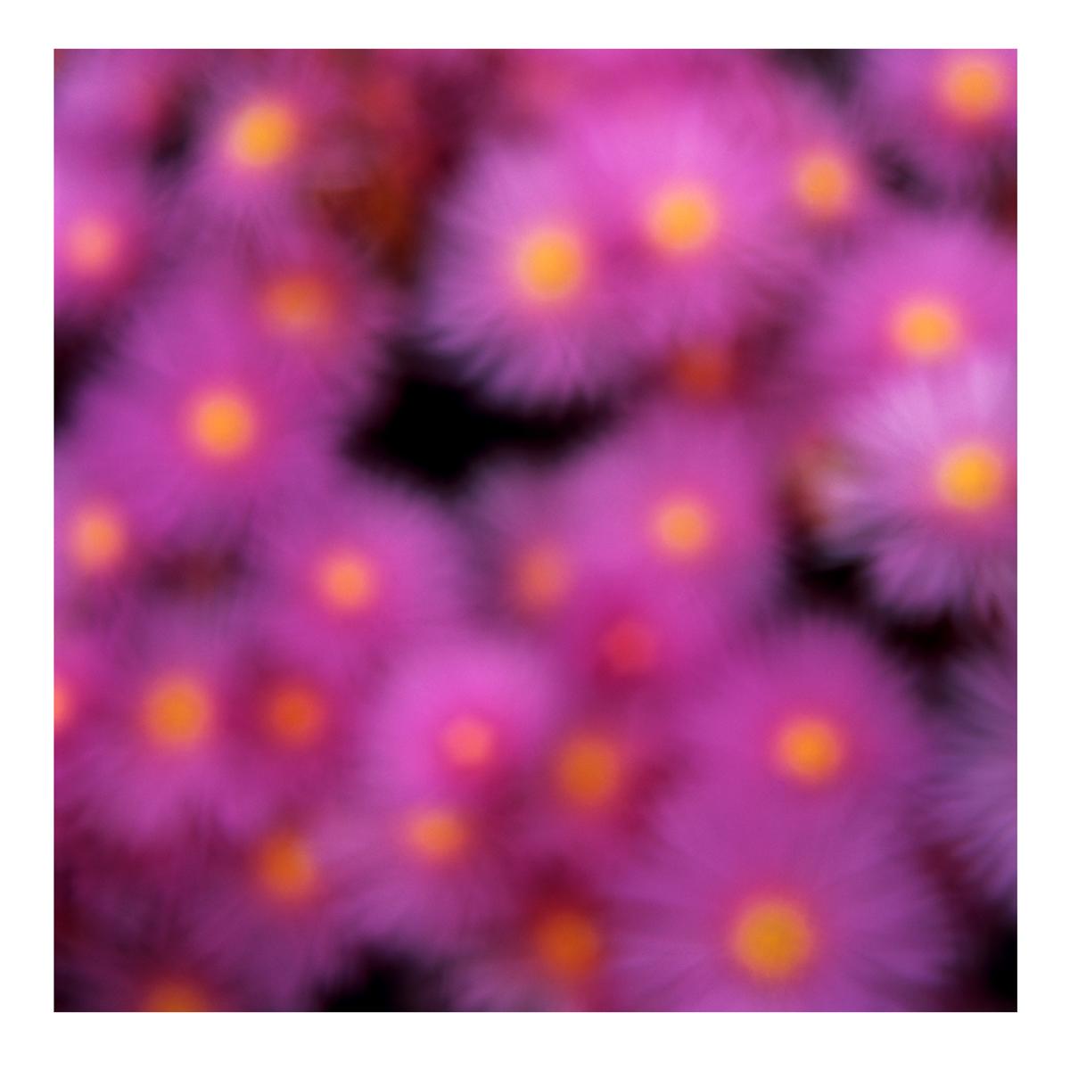 Flora In Situ #20, 2019