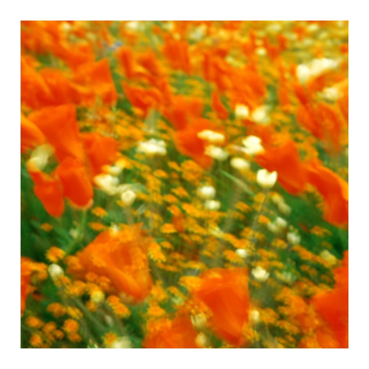 Flora In Situ #22, 2019