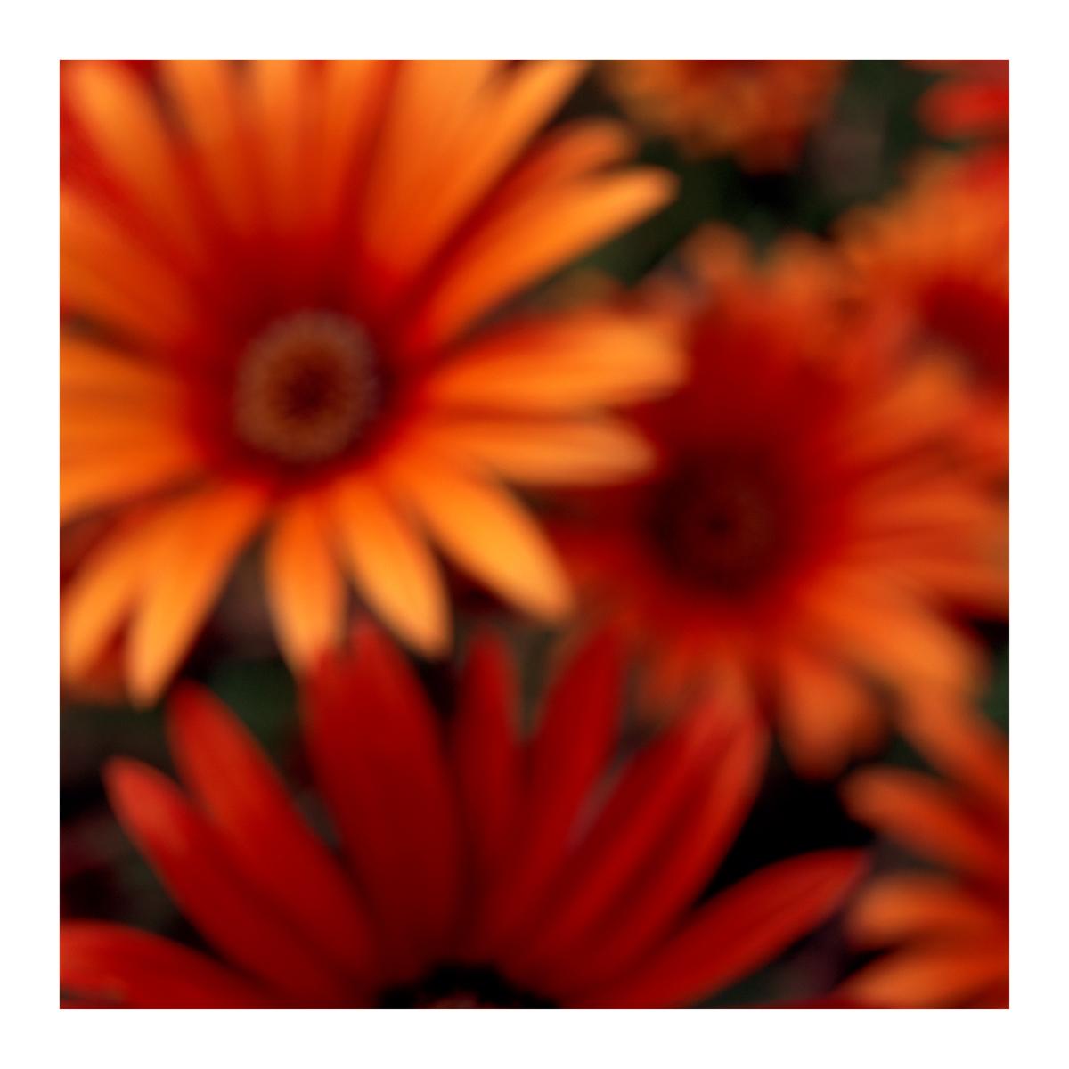 Flora In Situ #23, 2019