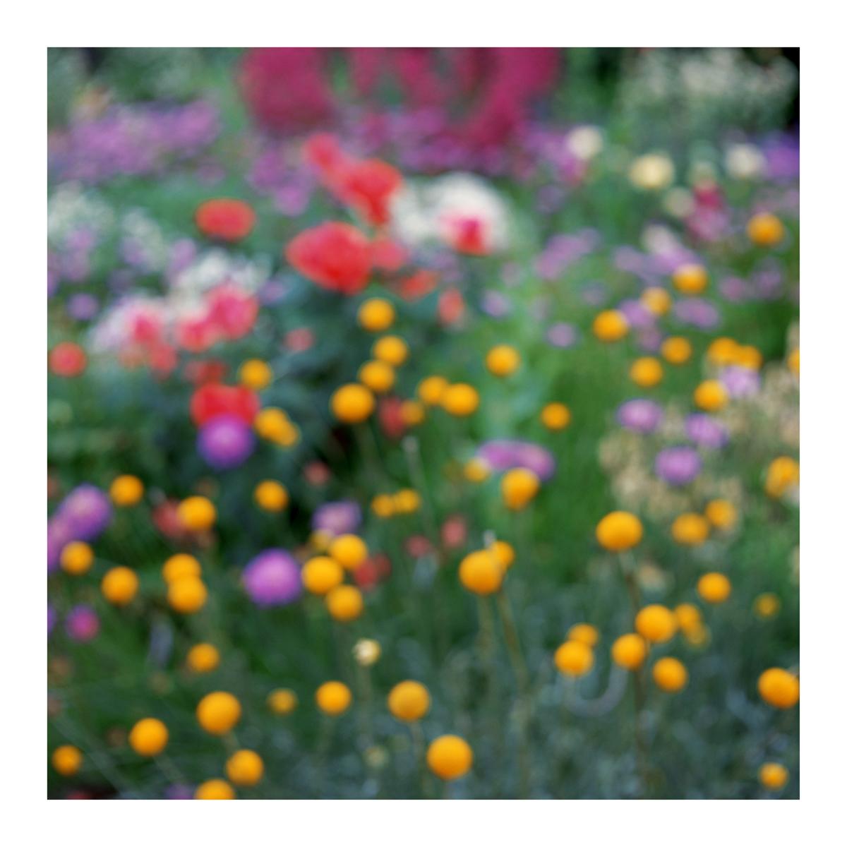 Flora In Situ #24, 2019
