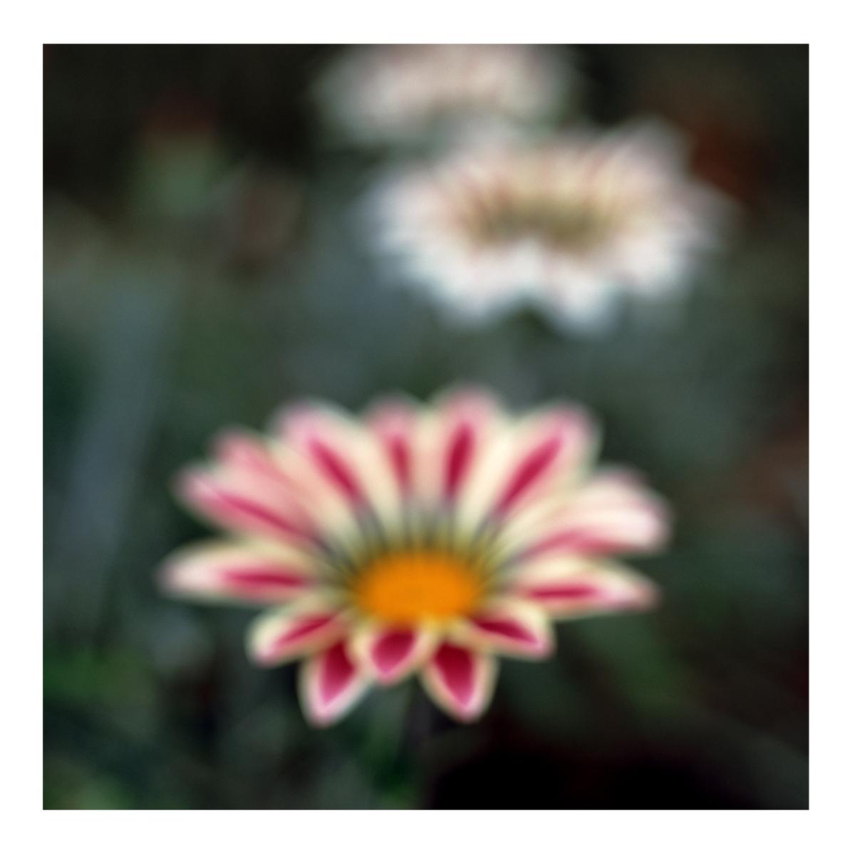 Flora In Situ #25, 2019