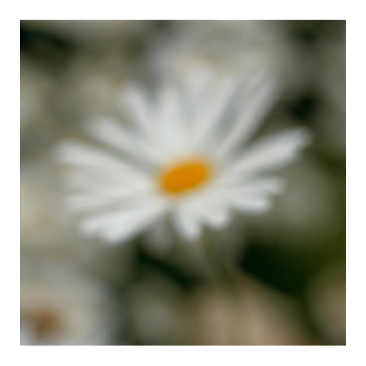 Flora In Situ #4, 2018