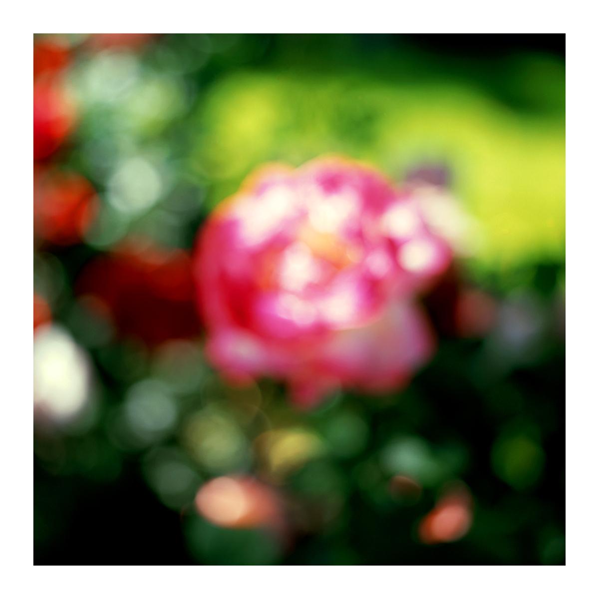 Flora In Situ #8, 2018