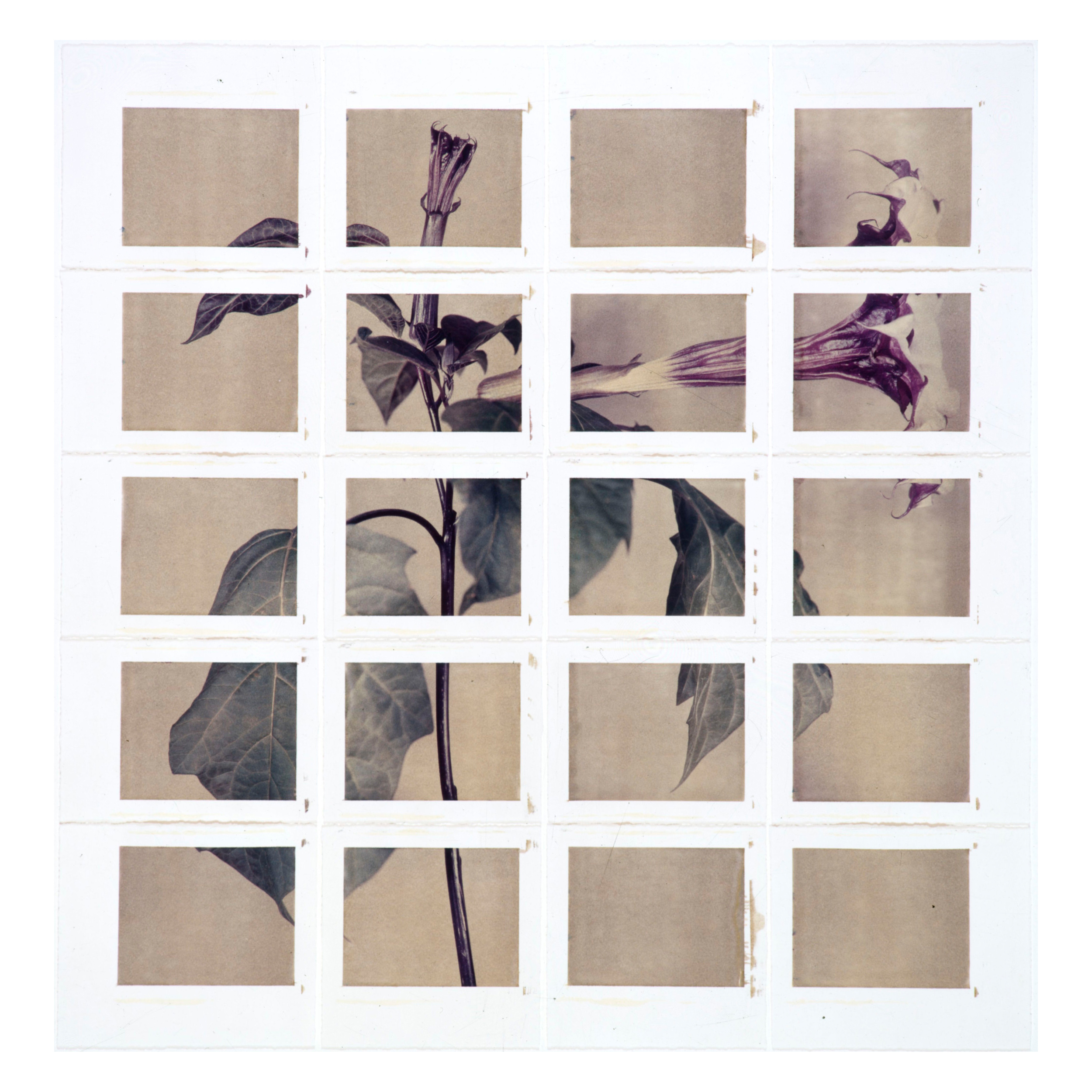 Horn of Plenty #1, 2000