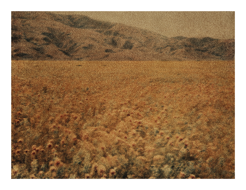 Poppies, California, 2014 (1995)