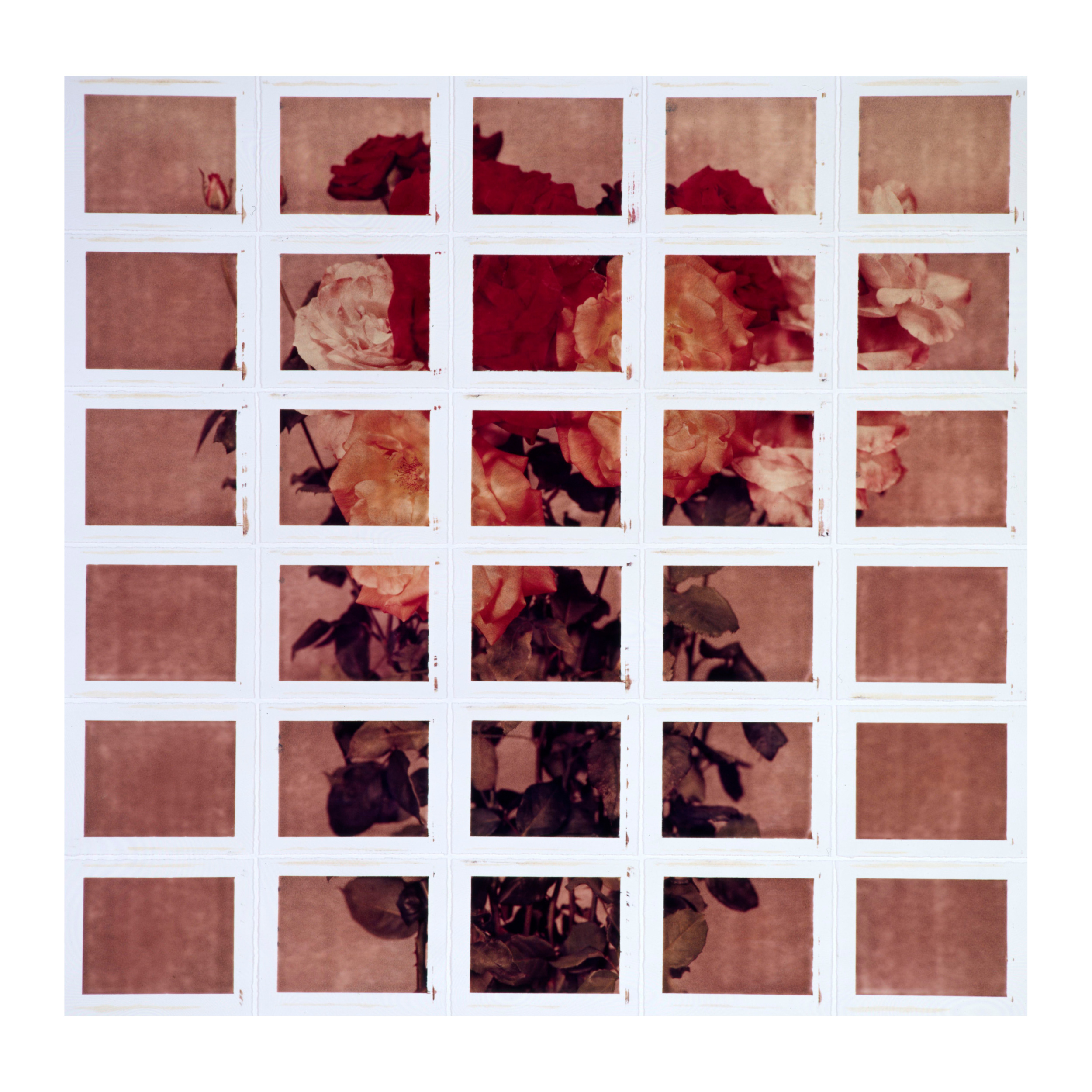 Roses #2, 2001