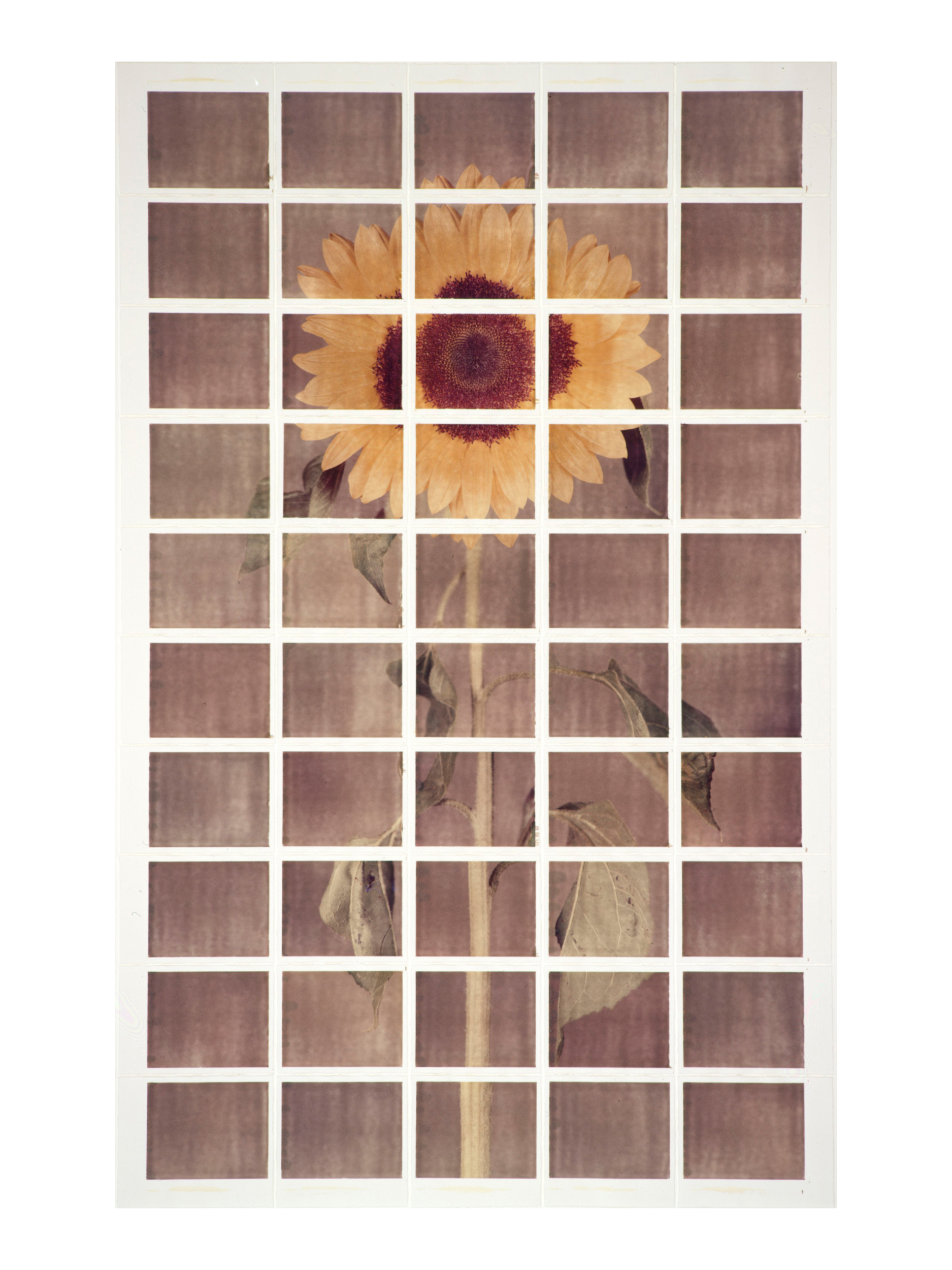 Sun Flower #2, 1999