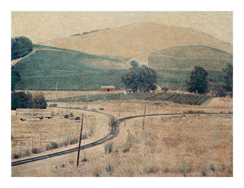 Vineyard, California, 2009 (1998)